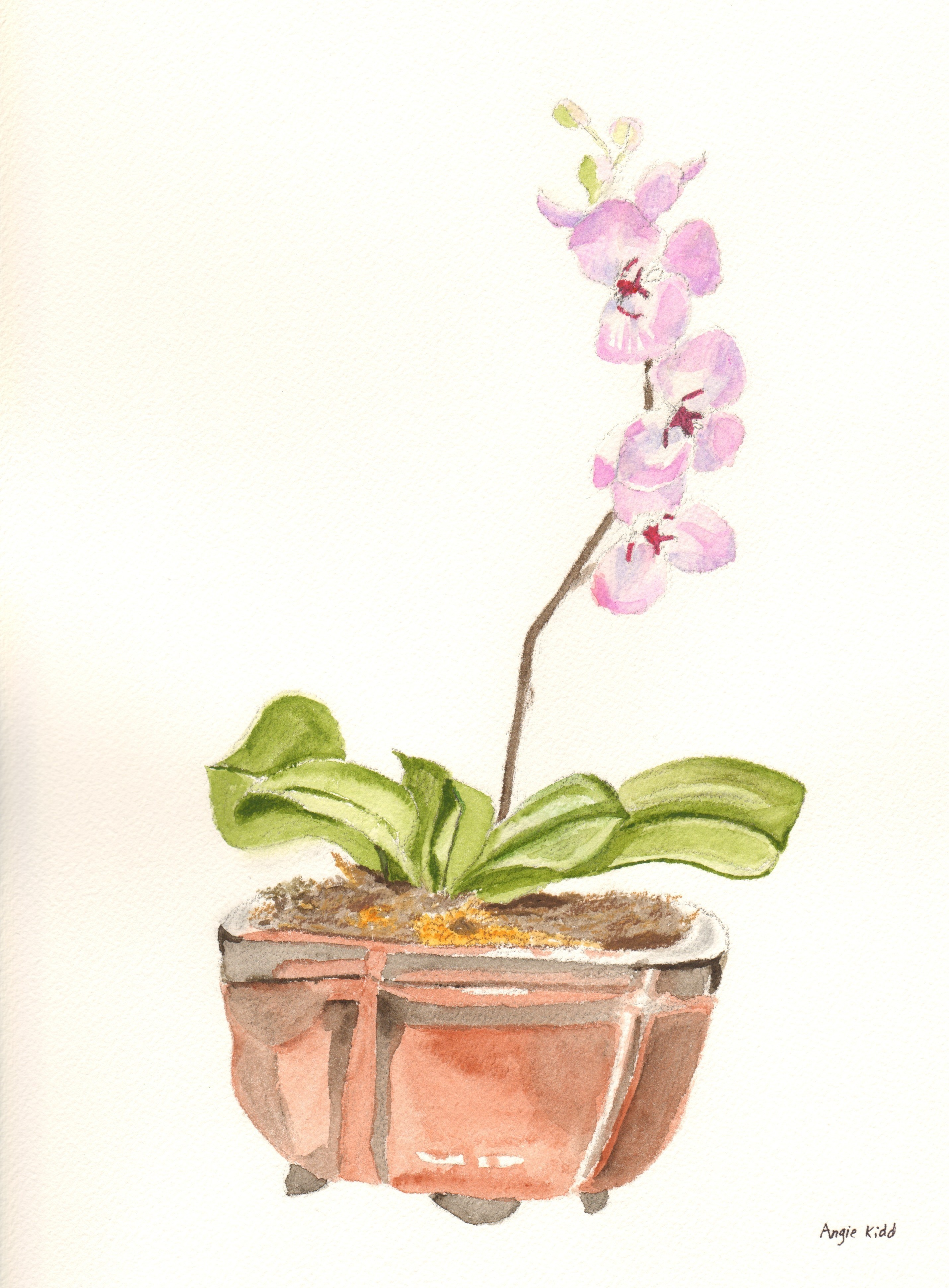 Pink Orchid Drawing